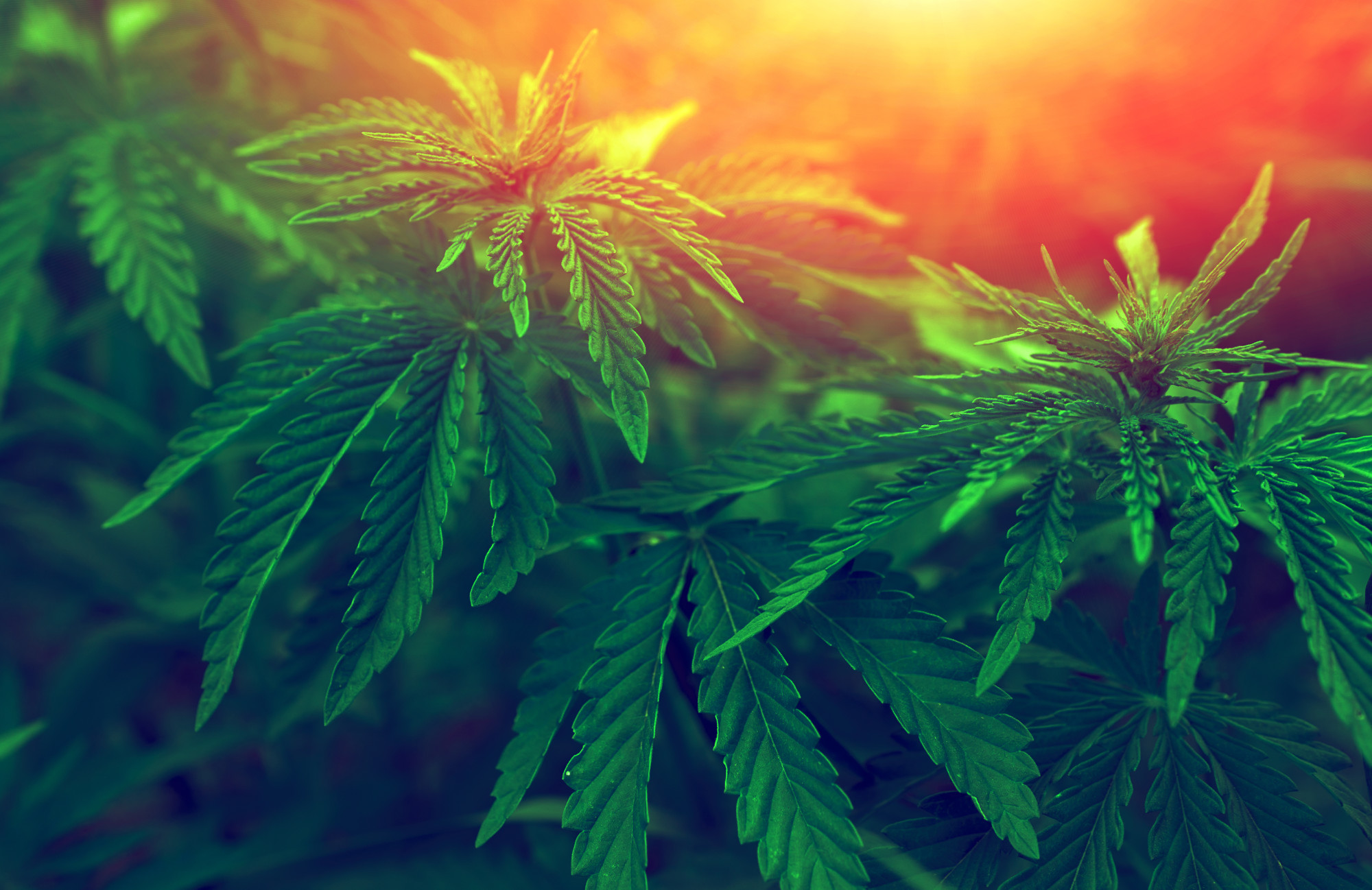 The Pros and Cons of Marijuana: The 5 Most Common Arguments For and Against Medical Marijuana